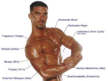 Latihan Membentuk Otot Dada Yang Benar
